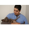 Image Gallery from   Gulf Coast Veterinary Specialists