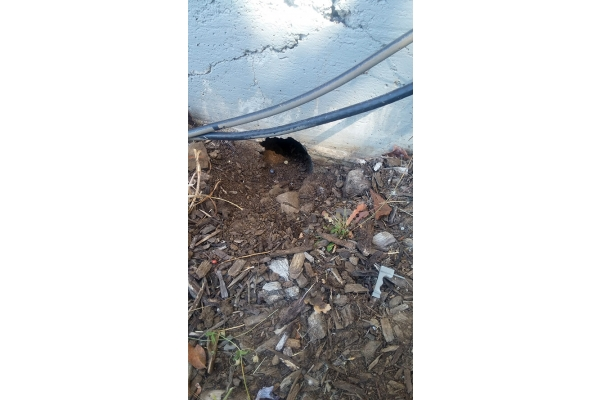 Image Gallery from Done Right Rodent Proofing
