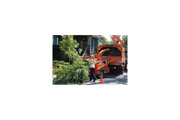 Image Gallery from Des Moines Professional Tree Trimming Services