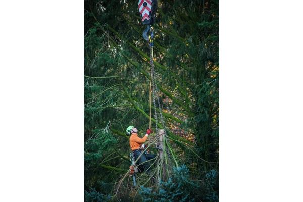 Image Gallery from O´Fallon Tree Service