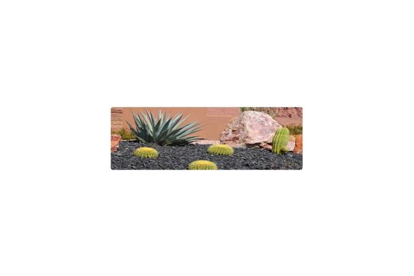 Image Gallery from Plantscape Formations, Inc.
