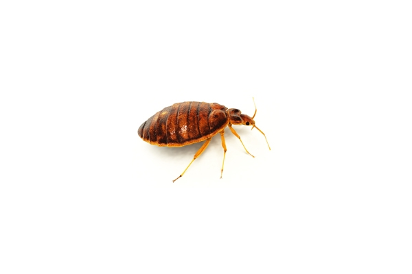 Image Gallery from Bed Bug Control Center